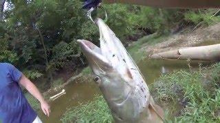Тайская рыбалка Что ловят в Тайланде(Даже в небольшом пруду порой можно поймать такое... Подпишитесь на канал CRAZY FISHING - ЧУМОВАЯ РЫБАЛКА https://www.youtu..., 2016-03-29T09:50:43.000Z)