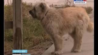 В Нарьян-Маре чипируют домашних и беспризорных собак