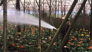 Flower Farm, Dalat, Vietnam