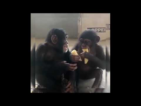 Funny animals video,wildlife,wild animals,funny video,animals,monkey,dog,cat...