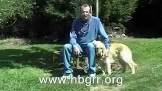 Homeward Bound Golden Retriever Rescue