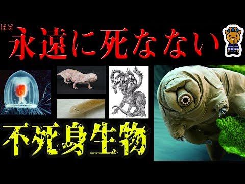 実在する不死身生物5選