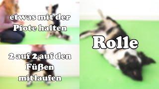 3 Hundetricks in 3 Minuten lernen || Tricktutorial Ep.#5