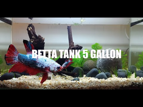 Betta tank 5 gallon setting up