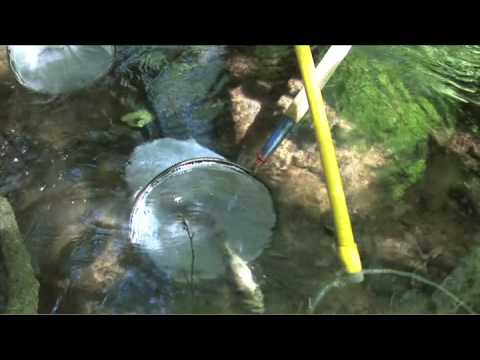 Electrofishing to help determine the health of New Jersey stream