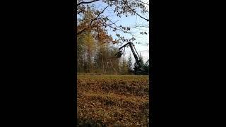 Kilka ujęć z ścinki drzew (zrąb)