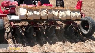 Managing Zebra Chip Disease in Potatoes