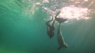 A Girl and a Dolphin HD