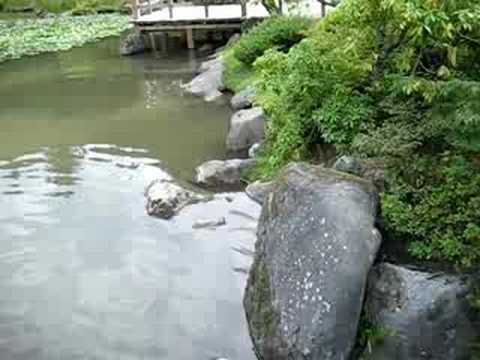 Seattle Japanese Garden