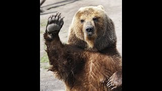 🇮🇹 GLI ANIMALI DI POTERE: L'ORSO 🐻, 🇬🇧 POWER ANIMALS: THE BEAR 🐻