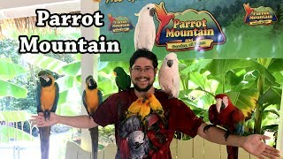 Parrot Mountain - A Trilling Parrot Attraction to Visit