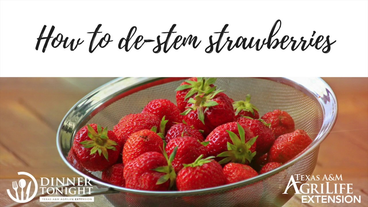 Best strawberries to grow in texas - De Stemming Strawberries