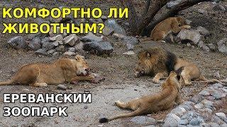 Ереванский зоопарк - пример для подражания? Армения