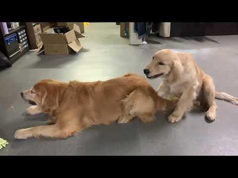 今の様子:もぐもぐ犬をひたすら撮る