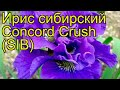 Ирис сибирский Конкорд Краш (СИБ). Краткий обзор, описание iris sibirica Concord Crush (SIB)