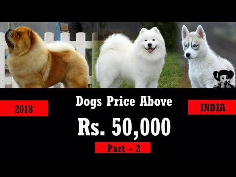 Costly dog in India  I  Dog Puppy  l  Dog Price list in India l  Imported dog breed price