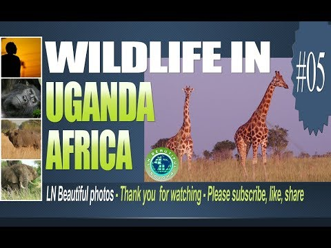 Wildlife in Uganda Africa - Wildlife in Uganda images - LNBP 05
