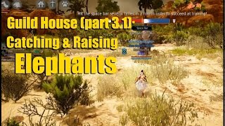 bdo guild house part 3 1 catching and raising elephants