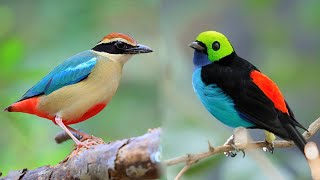 10 Most Beautiful Small Birds in the World
