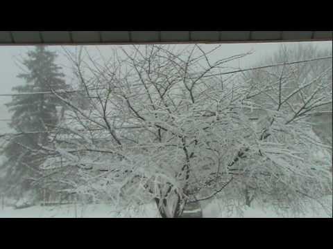 Blizzard in Havertown