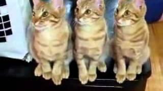 很有默契的三隻貓咪 thumbnail