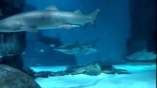 Shark Fish Tank For Your Big Screen Tv