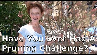 My Pruning Challenge