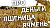 Область, район, одесса. Агрохимия. Беляевка одесской области, где высококвалифицированные. Продают посевной материал: ячмень, люцерна,горох и т. Д. Семена овощных культур в ассортименте. Как выгодно купить.