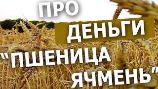 Сколько зарабатывают Фермеры. Наглядный пример. Сельское хозяйство. #СельхозТехника_ТВ №38