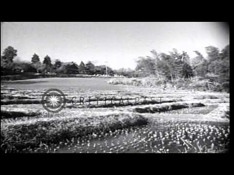 Postwar democracy brings freedom of press, freedom of speech and land reform to J...HD Stock Footage