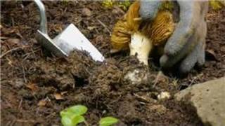 Spring Flower & Vegetable Care : How to Get Rid of Wild Mushrooms in the Garden