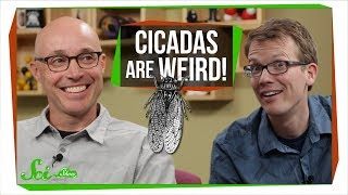 Cicada Symbiosis | SciShow Talk Show