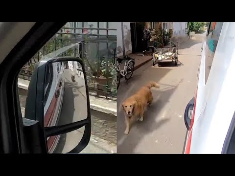 What-a-dog-Loyal-Dog-chases-ambulance-taking-sick-owner-to-hospital