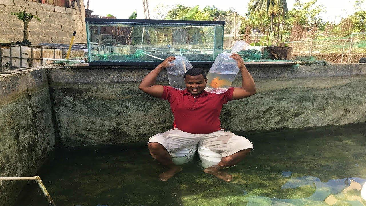 Los peces h brido del error aun est n vivo youtube for Criadero de peces goldfish