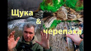 Щука и красноухая черепаха Рыбалка заготовка еды и кормление красноухой черепахи