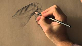 how to draw like michelangelo (part 1 the knee)