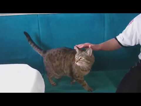 Вопрос: Нужно ли покупать билет для перевозки кота в электричке?