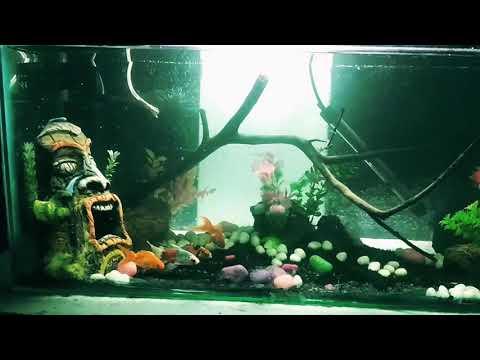 Aquarium decoration | gold fish tank