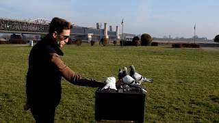 Gołębie akrobatyczne - TAKLA z Turcji trenowane na klatkę.