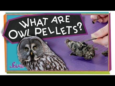 What Are Owl Pellets? - #sciencegoals