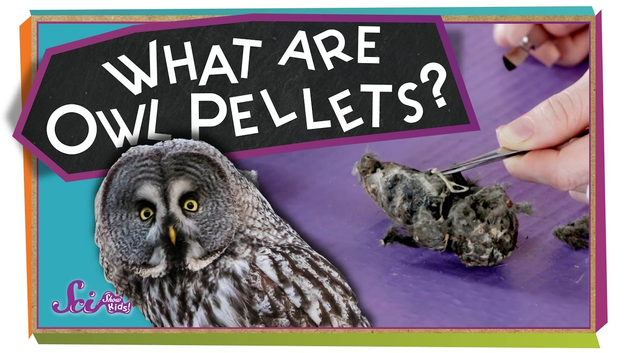 what are owl pellets sciencegoals youtube