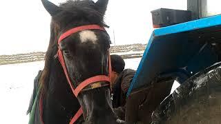 Конь увидел табун кобыл