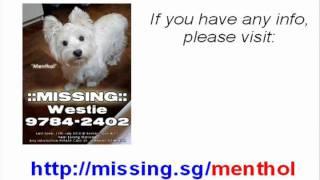Reward For Westie Dog Missing In Kembangan, Singapore