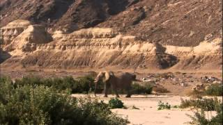 Desert Lions documentary english Part 1