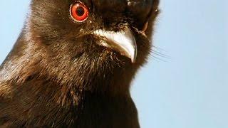 Cet oiseau a tué le respect - ZAPPING SAUVAGE