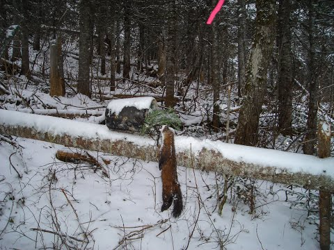 Marten Trapping In Quebec Part 1 Youtube
