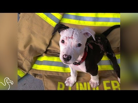 Puppy Who Survived Fire Helps Put Them Out Now
