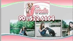 Furballs Of America, LLC Pet Sitting Service