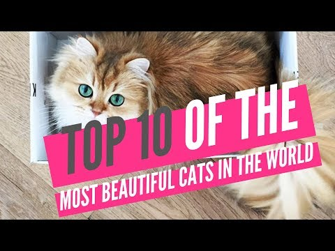 Top 10 Of The Most Beautiful Cats In The World