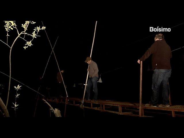 A primitiva pesca da lamprea con fisga no Río Tea